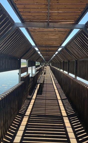 הגשר הצף על האגם בשמורת טבע החולה, הגליל העליון