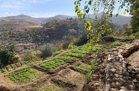 נוף הרי ירושלים הנשקף ממסלול מעיינות הסטף