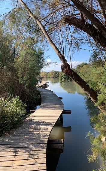 גשר על המים בשמורת הטבע עין אפק