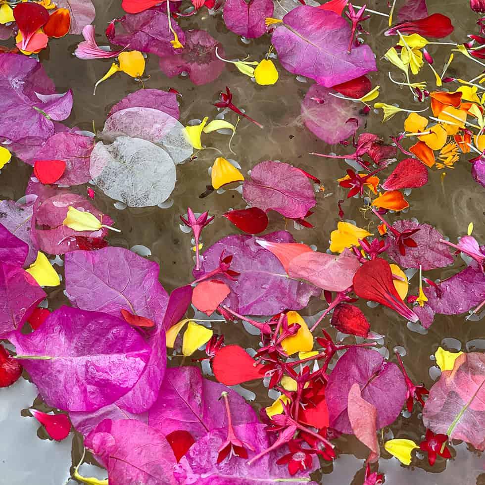 עלי ביגונוויליה בצבעים עזים כחלק מתהליך יצור הנייר בסדנה של תות נייר, זיכרון יעקב