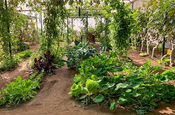 גן ירק ישוב צופר ערבה