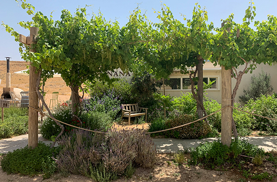 מרכז המבקרים של יקב ננה מעוטר בגפנים ירוקות