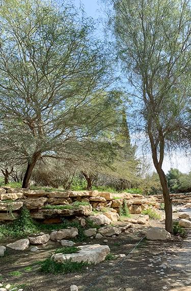 אחוזת הקבר בן-גוריון שדה בוקר