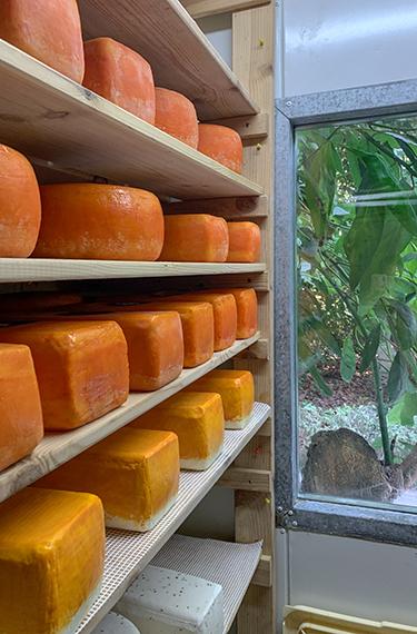 גבינות מתיישנות בגבניית חנן הגבן במושב חרות בעמק חפר