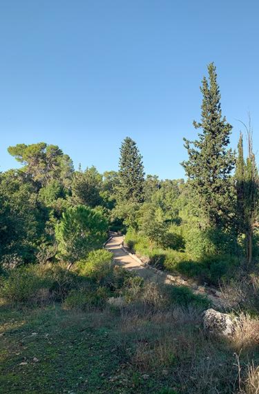 שביל נופי נחל קטלב ליד בית הקפה בר בהר מול מושב בר גיורא בהרי ירושלים