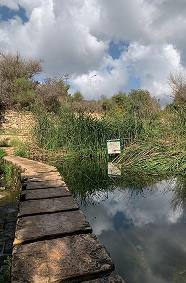 אבני מדרך מעל הנחל בגן הלאומי עין חמד