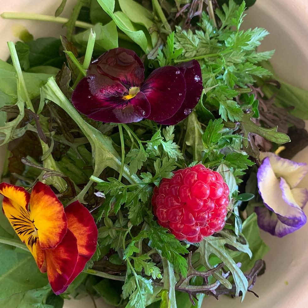 סלט עם צמחי תבלין ופרחי מאכל בירוקלה במושב מטע בהרי ירושלים