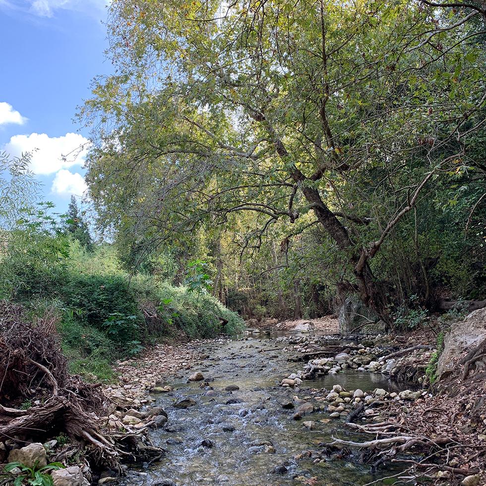 מבט לנחל כזיב במסלול המים עין חרדלית בגליל המערבי