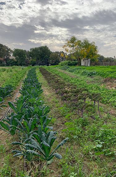 גן הירק היפה של הגינה האורגנית בבית יצחק