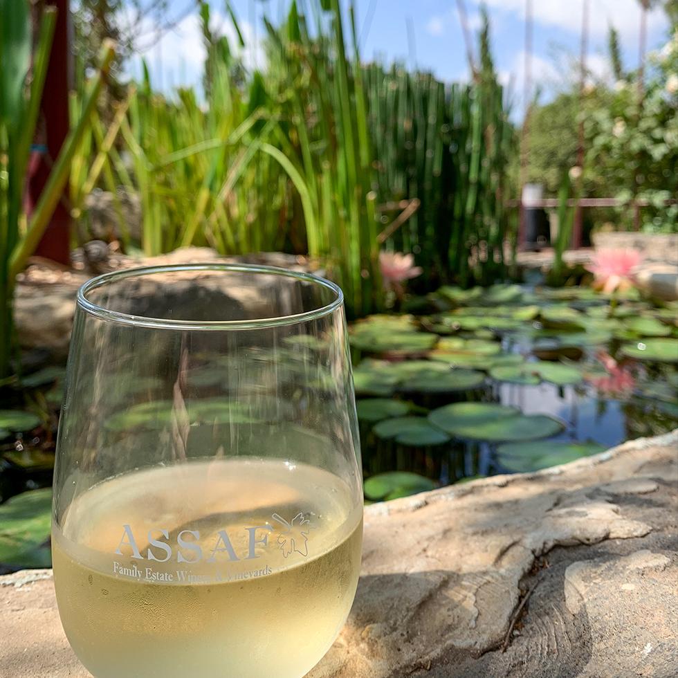 כוס זכוכית עם יין לבן מונחת על שפת הבריכה האקולוגית בחצר יקב אסף ברמת הגולן