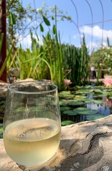 כוס יין לבן על רקע בריכה אקולוגית ביקב אסף ברמת הגולן