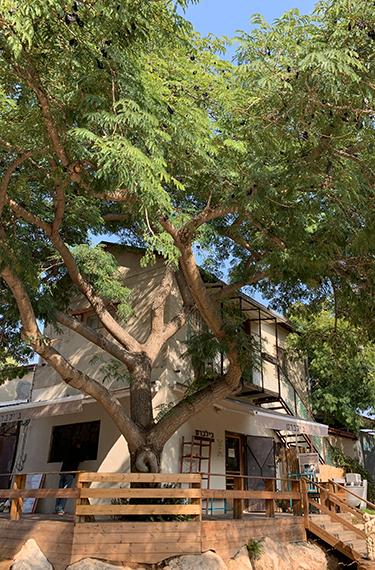 מבנה המאפייה ובית הקפה ג'ילברט עם המרפסת הנאה והעץ המרשים בקיבוץ נען