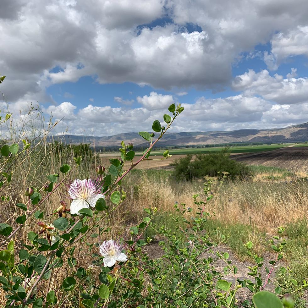 נוף עמק החולה עם שמיים מלאי עננים מצויירים