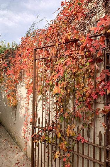 עלי שלכת אדומים-כתומים על שער וקיר הכניסה למסעדת קיטשן אנד גארדן בתל יצחק