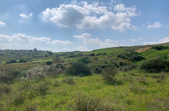 גבעות הכורכר בנס ציונה מכוסות ירוק ופריחה וברקע שמיים תכולים עם עננים אפורים-לבנים יפהפיים