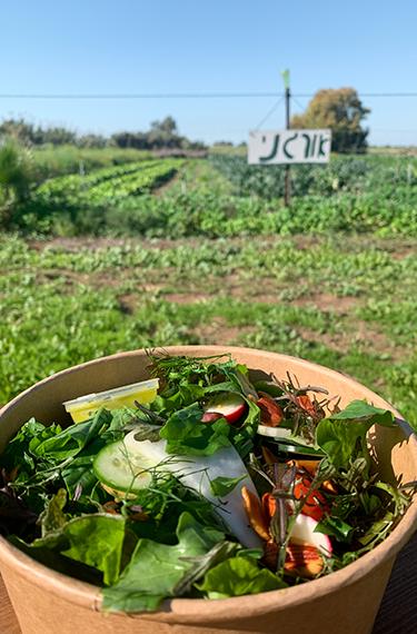 סלט ירקות על רקע גן הירק האורגני של משק מלמד בכפר הנגיד