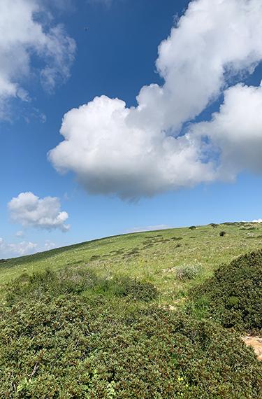 נוף לגבעות ירוקות, שמיים כחולים ועננים לבנים מצויירים בהר ברקן בגלבוע