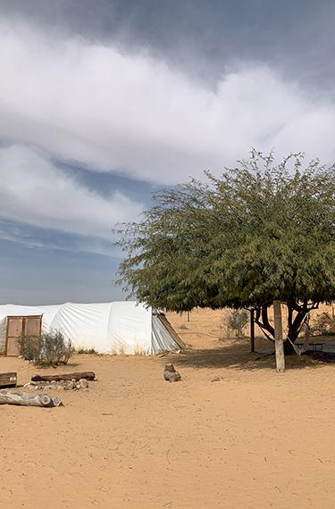 אוהל ועץ על חול צהוב בחוות שירת המדבר ליד היישוב באר מילכה בפתחת ניצנה