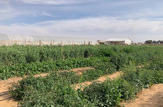 גינת הירק היפה במשק יוסף ליד היישוב באר מילכה