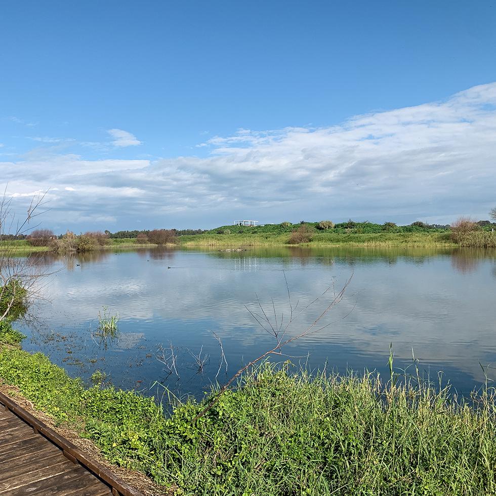 אחת הבריכות באגמון חפר, שמיים תכולים עם עננים לבנים במרחק, וצמחייה ירוקה מעטרת את הבריכה. בפינת התמונה שביל עץ.