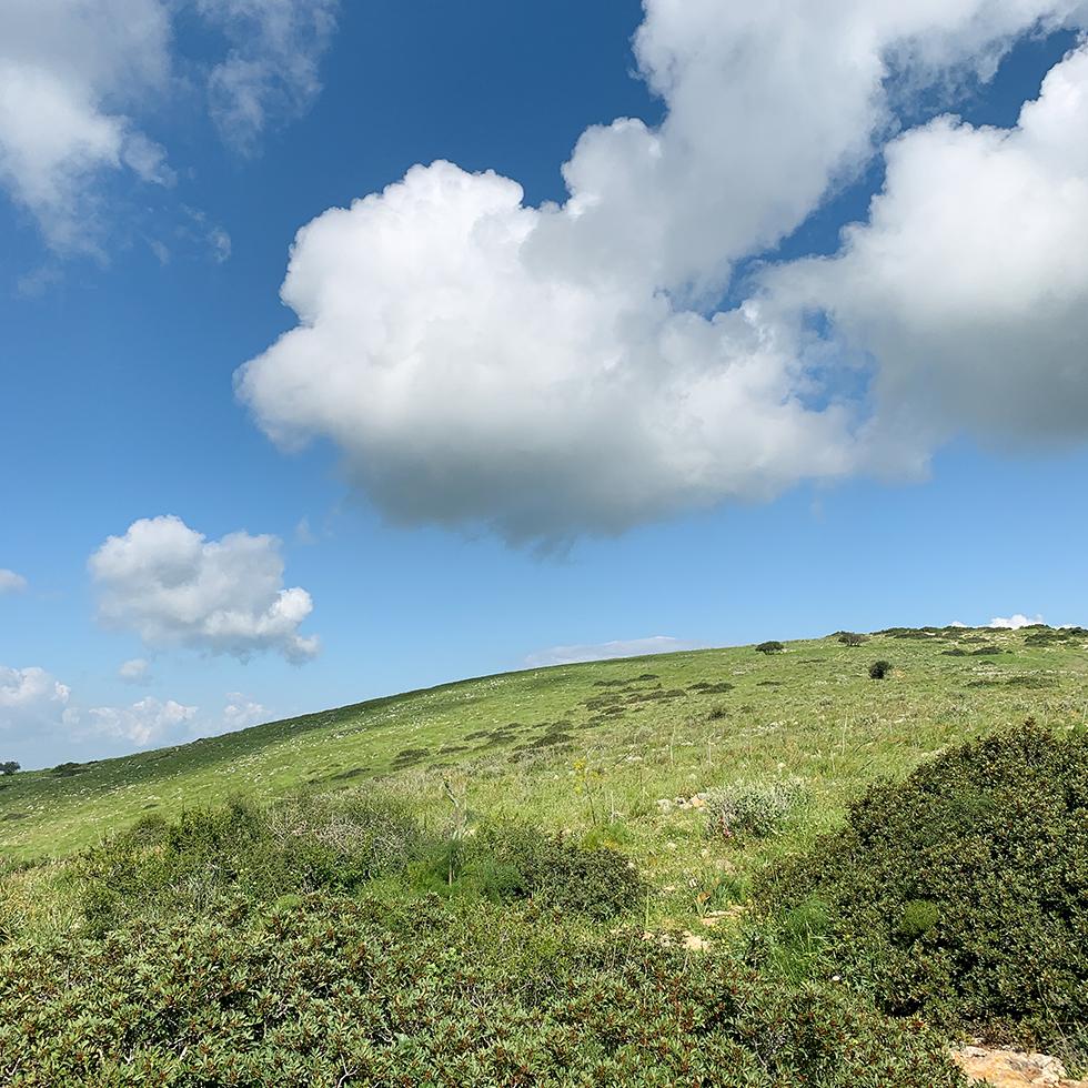 נוף הר ירוק עם עננים לבנים מושלמים על רקע שמיים כחולים בהר ברקן