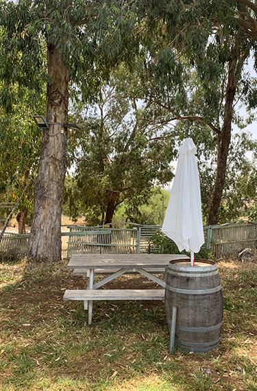 ספסל פיקניק, חבית עץ ושמשייה לבנה תחת עץ האקליפטוס ביקב עגור