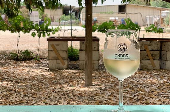 כוס יין לבן בחצר של משק אופיר ביישוב אלון הגליל
