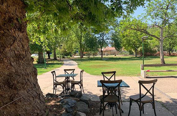 כסאות ושולחנות תחת עץ הדולב היפה במרכז קיבוץ שדה נחמיה ליד גלידה גלילטו