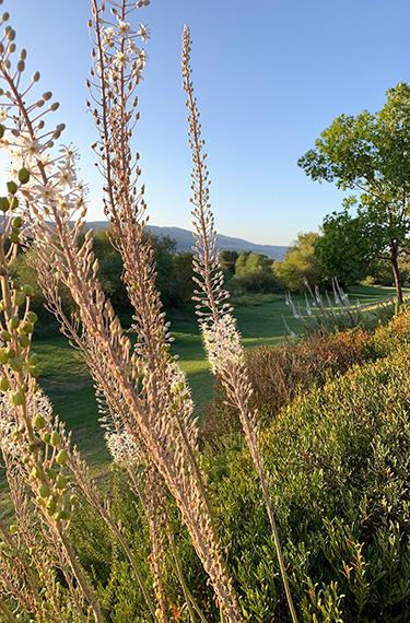 חצבים ומדשאה יפהפיה בשביל טיילת עמי בין שדה נחמיה לכפר בלום